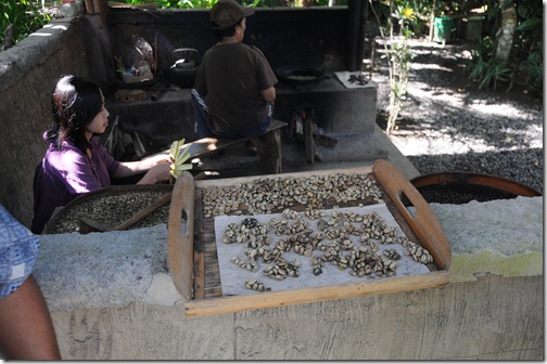Processing Kopi Luwak coffee in Bali