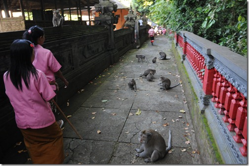 Monkeys in the Alas Kedaton Pura, Bali