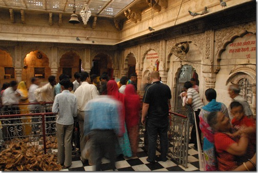 Inside the Karni Mata Temple (Rat Temple) near Bikaner, Rajasthan, India