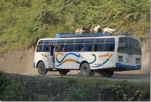 Goats on a bus on the road to Kathmandu, Nepal