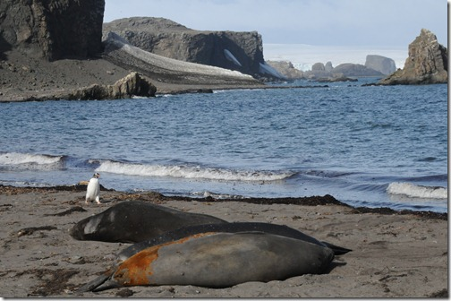 Elephant Seal Beach, King George Island, Antarctica