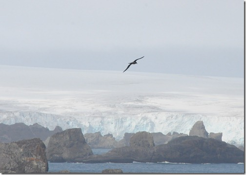 Rare albatross sighting over King George Island, Antarctica