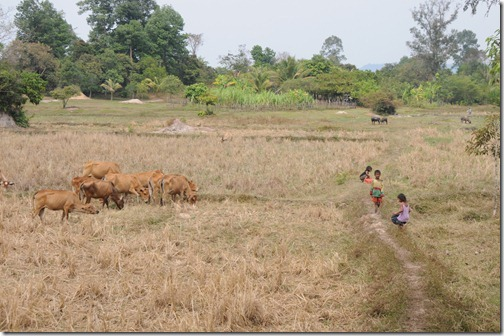 Village children and cows near Banteay Srei Temple, Cambodia