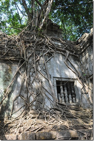 Strangler fig slowly destroying the temple of Beng Mealea, deep in the Cambodian jungle