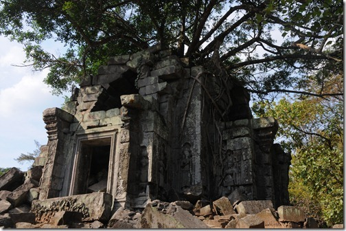Tree growing from a tower at in the temple of Beng Mealea, Cambodia