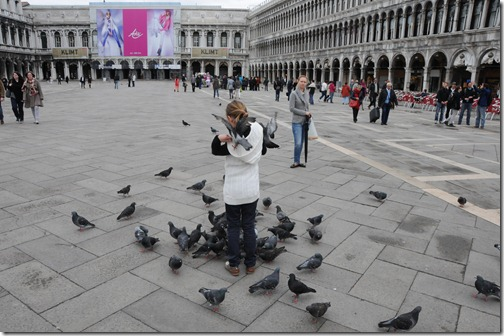 Pigeons in Piazza San Marco in Venice, Italy