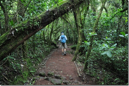 Hiking through the forest between Marangu Gate and Mandara Camp on Mount Kilimanjaro, Tanzania