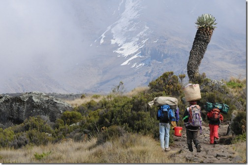 Porters climbing Marangu trail from Horombo Camp to Kibo Hut on Mount Kilimanjaro with Kibo Peak in the background