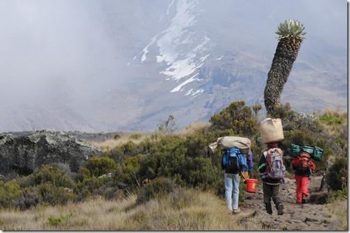 Porters climbing Marangu trail from Horombo Camp to Kibo Hut on Mount Kilimanjaro with Kibo Peak in the background